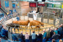 Aberdeen and Northern Marts (ANM) deputy head of livestock, John Angus, selling cattle at Thainstone.