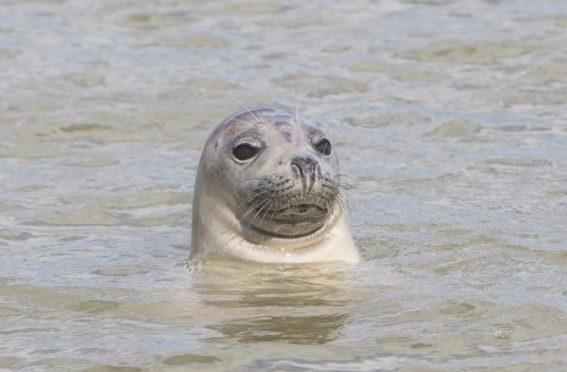 A seal.