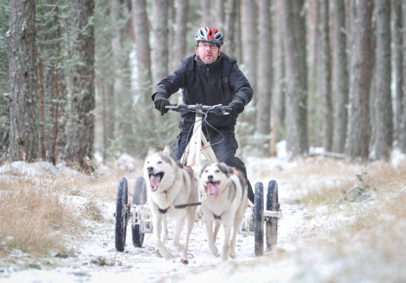 More Than 1 000 Huskies Hit The Highlands As The Aviemore Sled Dog