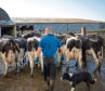 Average dairy farm incomes were up due to a boost in the milk price last year.