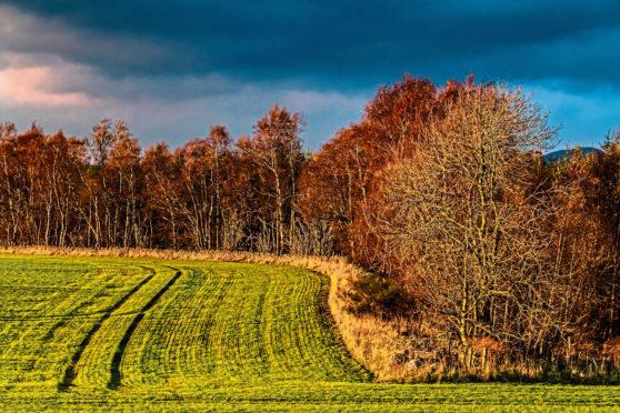 Farm forestry