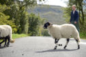 Two travel bursaries are available for youngsters working in the sheep sector.