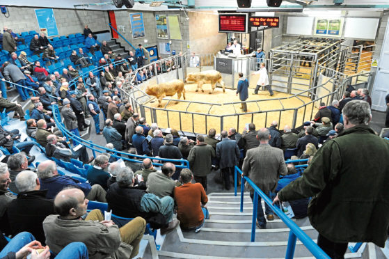 Thainstone 25th anniversary show and sale.    Picture by KEVIN EMSLIE