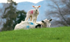 The NSA says a no-deal would be unacceptable for the sheep sector.