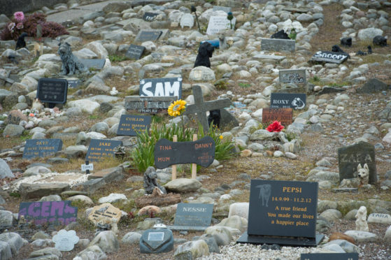 Cullen pet cemetery