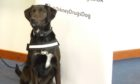 Zoe will be the islands' first drugs detection dog.
