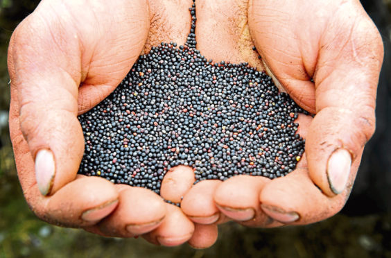 The project involves five organic farmers and animal feed firm Norvite.