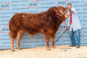 Allanfauld Nemesis sold for  27,000gn.
