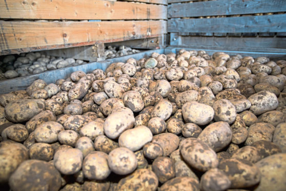 The value of tatties decreased in the year.