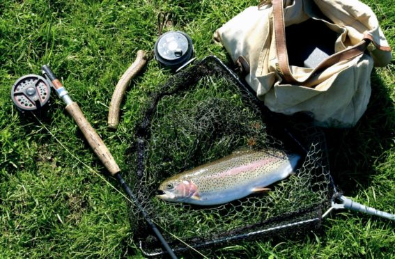 A Rainbow Trout.