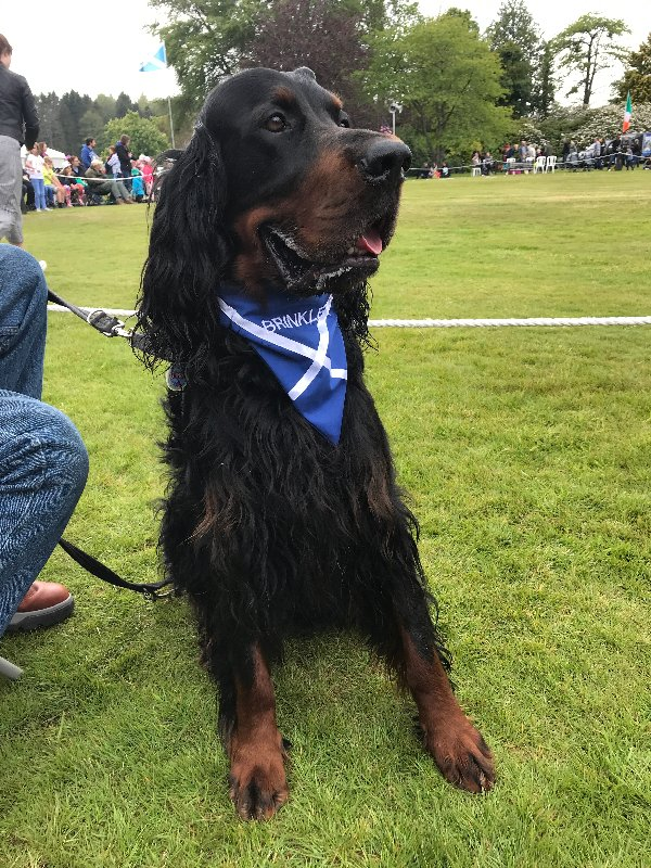 Huge pack of dogs from declining breed gather at Speyside highland games held at castle where they originated