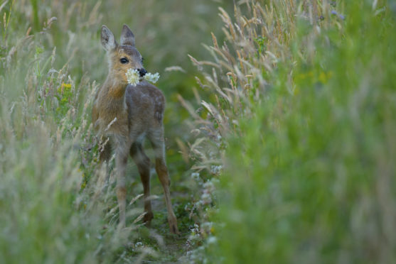 Scottish Wildlife Portrait category and winner of Scottish Nature Photographer of the Year 2018 - Phil Johnston.