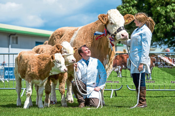 Newlyweds, Laura and Robert Beattie, with Simmental overall champion, Corskie Disco, and her twin calves.