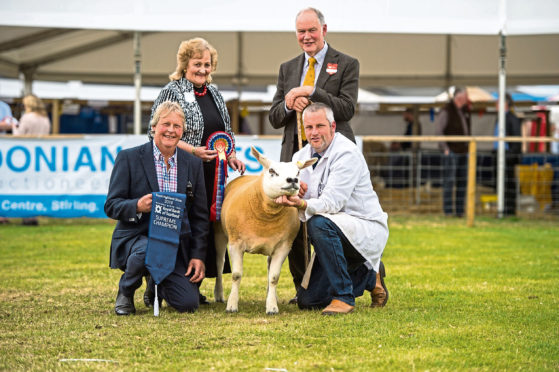 The sheep interbreed championship went to a Texel gimmer.