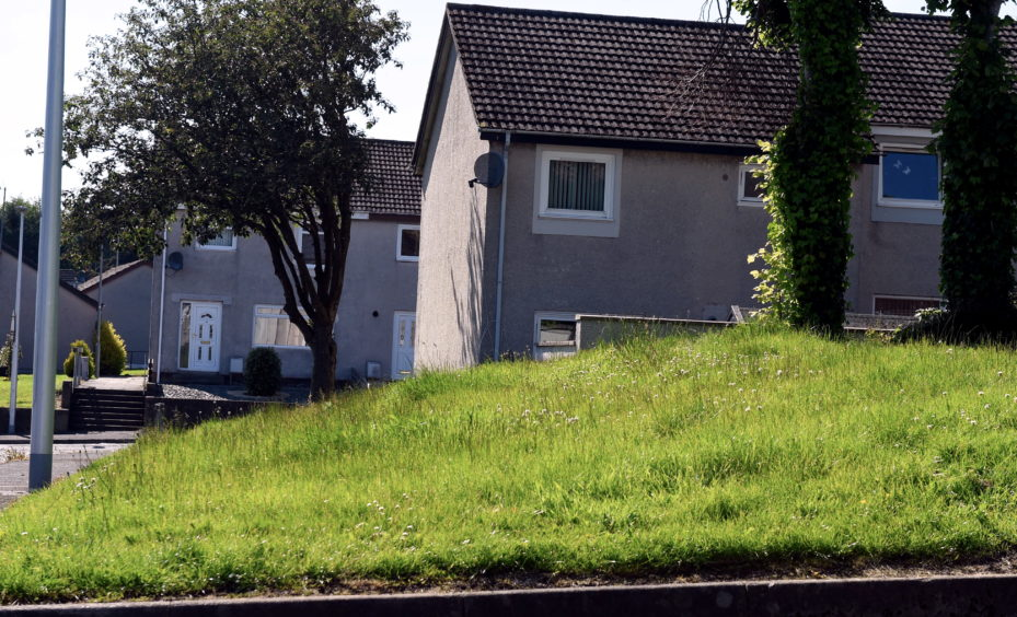 Overgrown grass in Tarbothill Road, Bridge of Don Picture by HEATHER FOWLIE