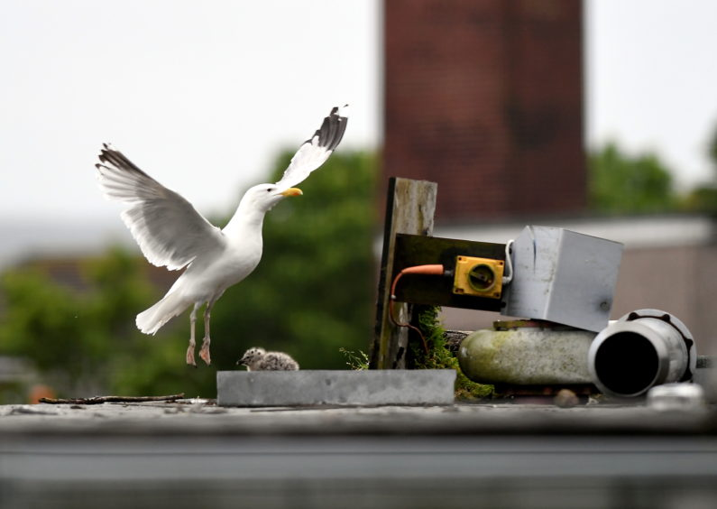 Council resumes demolition on old Aberdeen school after gulls fly the nest