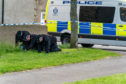 The Police are conducting a metal and fingertip search of the scene of the crime at the Doocot Park.