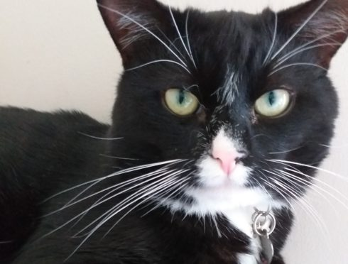 Lonely Aberdeen woman can't find acceptance for her and her cat | Press and Journal