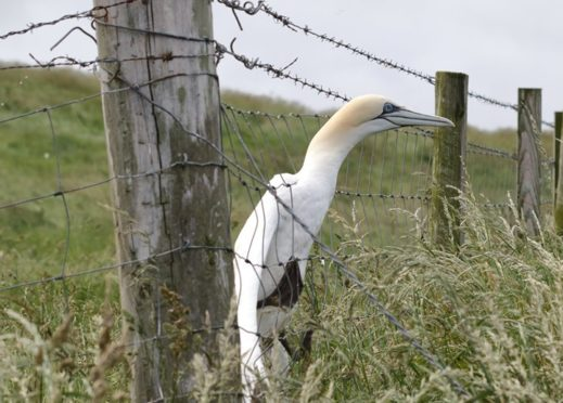 Mark Strachan took this picture of the bird as his fellow walker Peter Lewis prepared to rescue it