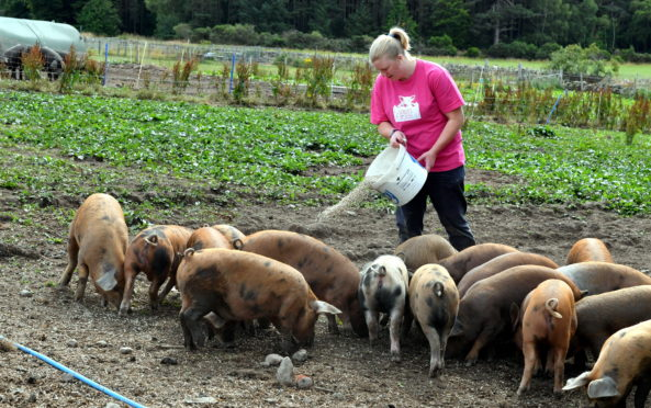Louise Urquhart of Louise's Farm Kitchen at Milton of Auchinhove, Lumphanan, Banchory.       Picture by Kami Thomson
