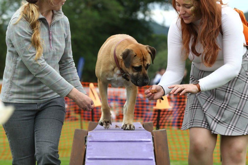 'World's first' Highland Games for dogs held in Inverness