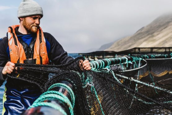 Commercial aquacutural photography for Scottish Sea Farms, Shetland.