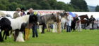 Horses line up for inspection