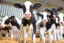 Vets hope the promotion of farm assurance schemes can help improve the welfare of animals.