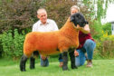 The 10,000gn Cairness ram lamb.