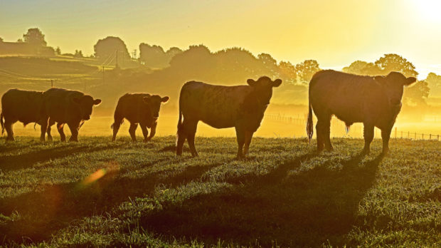 The SBA has accused processors of not doing enough to help the beef sector.
