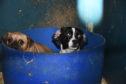 Images taken puppy farm in Fyvie, Aberdeenshire
