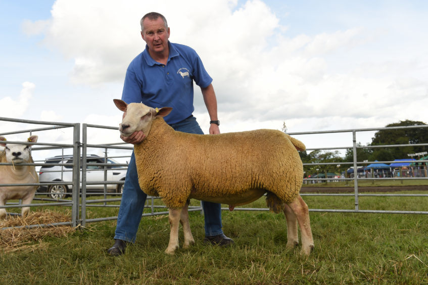 Gary Duncan from E and E Duncan with the Charollais Sheep Reserve TUP Lamb and full brother to the Gimmer.
