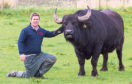 Buffalo farmer Steve Mitchell and company mascot 007