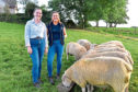 SISTERS EILIDH (l) AND ERIN DUNCAN WITH SOME OF THEIR CHAROLLAIS FLOCK  DESTINED FOR THAINSTONE.