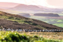The Scottish Government has promised to establish an agricultural modernisation fund.