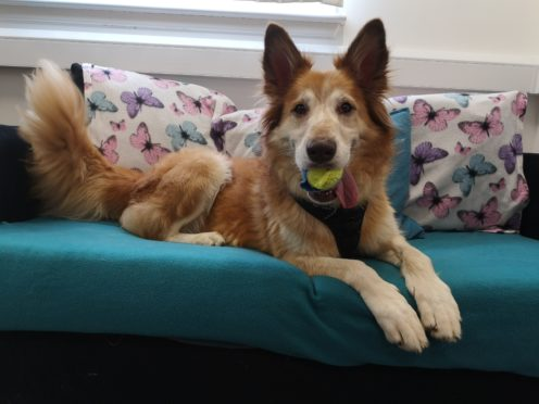 Scottish SPCA's urgent appeal for forever homes for three dogs | Press and Journal