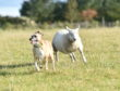 Tallula the sheep with Kia.  Picture by Scott Baxter