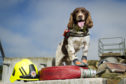 Diesel the Fire Service's search and rescue dog.