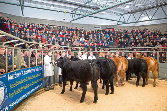 Prime cattle champions line up at the Aberdeen Christmas Classic