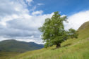 """The Last Ent of Affric"", in Glen Affric has been named as Scotland's Tree of the Year for 2019"