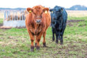 ScotEID's new system should mean better traceability and make disease outbreaks easier to contain.