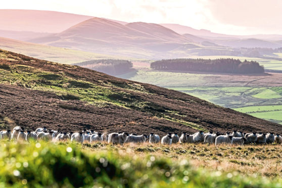 The initiative was launched by the National Sheep Association.