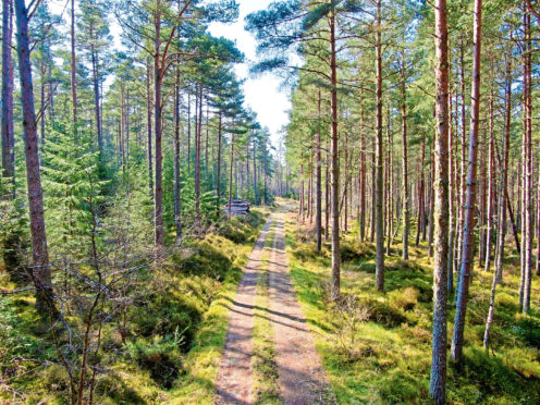 The Scottish Government's planting target of 25,000 acres was exceeded this year, with 27,700 acres of new woodland, according to the UK Forest Market Report.