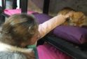 Sienna Falconer visiting the cats at Willow's Animal Sanctuary