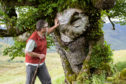 "The Last Ent of Affric has been hailed for its efforts as the ""symbolic leader"" in the battle against Dutch elm disease"