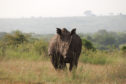 rhino at Nairobi National Park