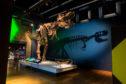 Tyrannosaurus Rex CREDIT- JAMES HORAN