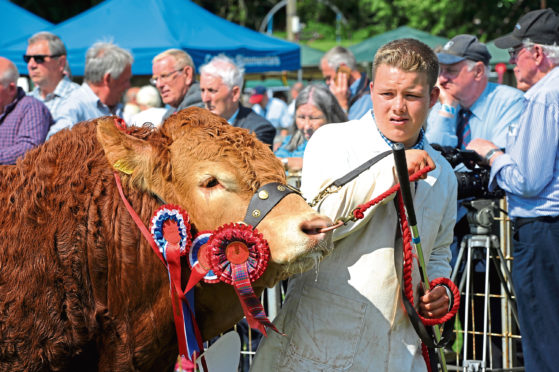 Limousin breeders will flock to the two-day event in August 2020.