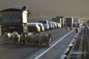Sheep on the road on Dornoch Bridge. Picture by Sandy McCook