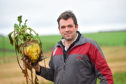 Stewart Davidson with one of his champion fodder beets at West Cortiecram Farm, Mintlaw.